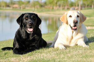 The Top 10 Most Popular Dog Breeds
